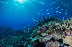 Great Barrier Reef Queensland Australia