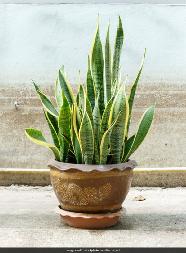 5 Plants To Make Your Home Clean And Green And Combat ...