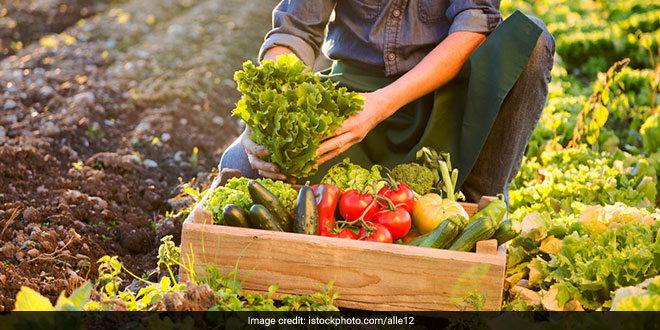World Food Day 2020: We Need To Find A Way Where We Produce Food For Ourselves And Also Save Nature, Says World Food Programme India Director