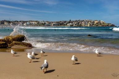 Sydney w 2 dni co zobaczyć