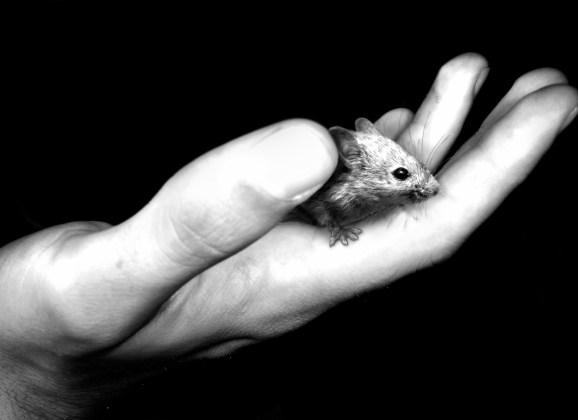 FILM: Of Mice and Men