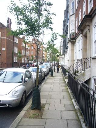 New Amelanchier trees in Marylebone