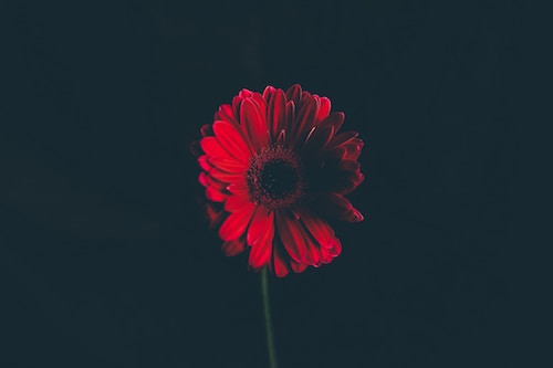 Annie Spratt on Unsplash