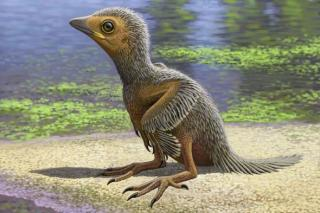 credit raul martin 04-og-fossil-bird-Reconstruction_2.adapt.590.1