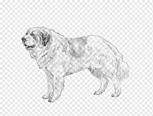 20 чудесно раскраска собаки распечатать голден ретривер ...