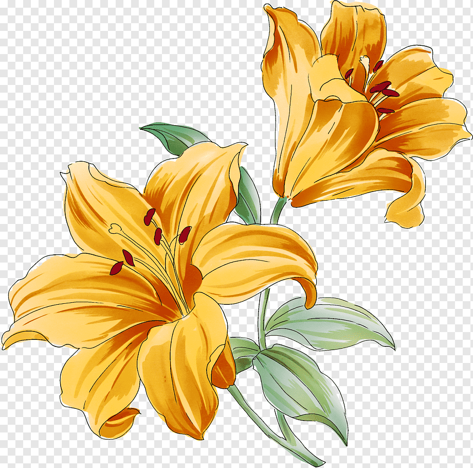 Yellow Lilies Art Flower Drawings Watercolor Painting Lily Of The Valley Orange Color Lilium Png Pngwing