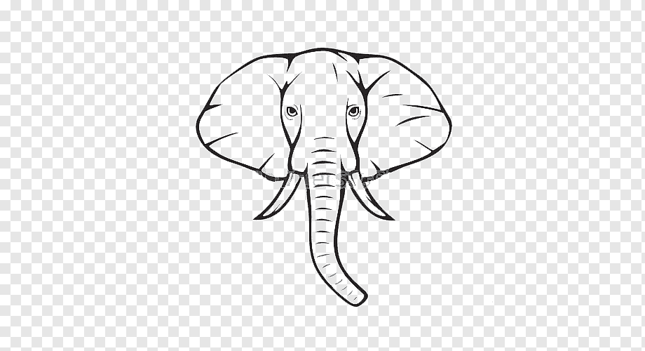 African Elephant Drawing Indian Elephant Elephant Illustration White Mammal Face Png Pngwing