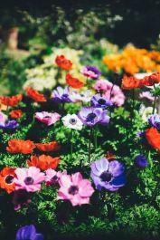 tuin van je hart