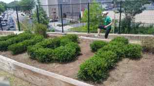 has boxwood plants too!