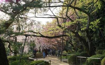 Garden at Heian Jingu
