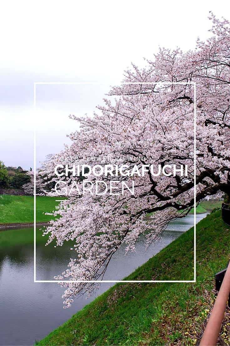 Chidorigafuchi garden is one of the best places to go flower viewing in Tokyo