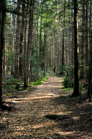 Maple Canyon trail