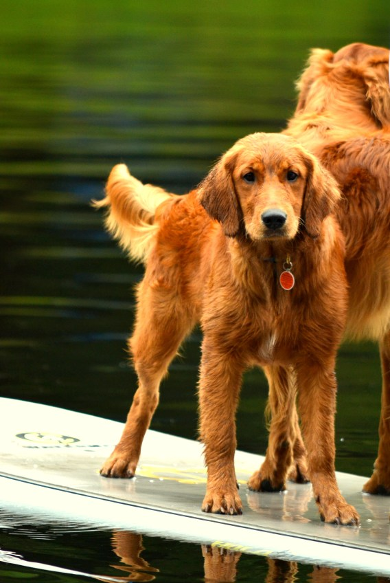 Paddle boarding with her best friend.