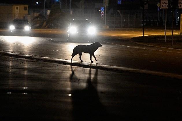 https://i1.wp.com/wac.450f.edgecastcdn.net/80450F/kool1079.com/files/2014/04/466569787-Dog-Crossing-Street-at-Night_-Pascal-Le-Segretain-Getty-e1398724533539.jpg