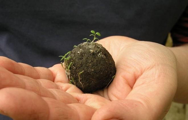Samenbomben seed bombing thailand wiederaufforstung millionen von bäumen gepflanzt Wach Auf