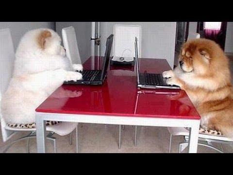 【おもしろ犬】6秒動画vine 3分丸ごと笑えるムービー