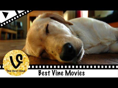 【癒し系】Vineおもしろ犬動画