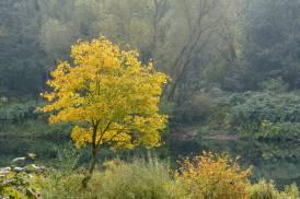 Herbstdunst an der Ruhr