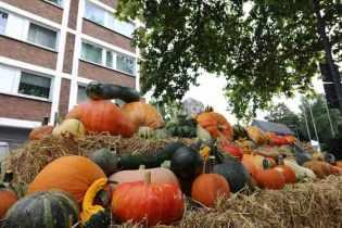 Herbstliches-Werden-16