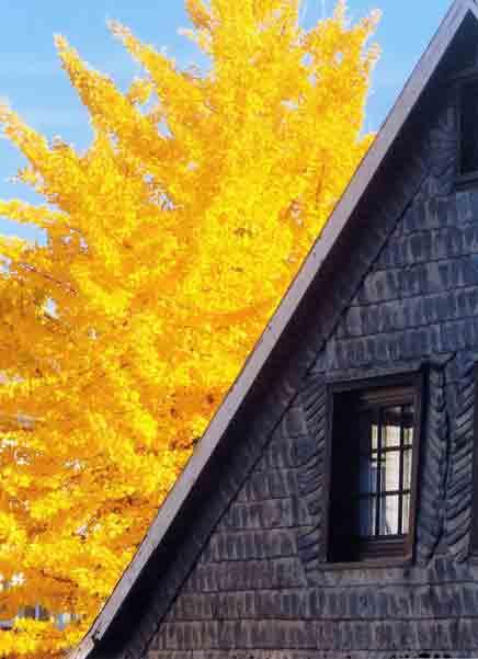 Herbst-Bungertstraße