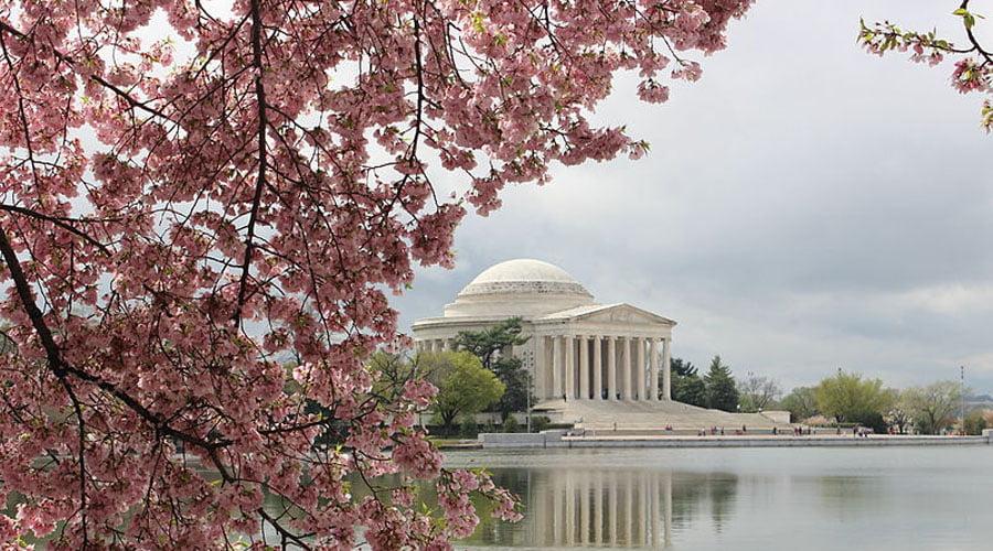 Washington Dc Cherry Blossom Festival Parade April 7 10 2022 Wade Tours Bus Tours