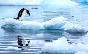 Numarul coloniilor de pinguini din Antarctica scade.