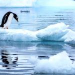 Temperatura record inregistrata in Antarctica