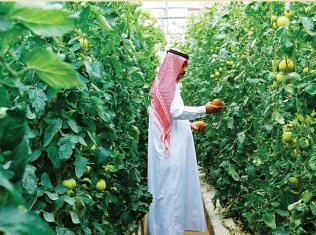 قطر تواجه الحصار بالاكتفاء الذاتي