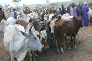 موريتانيا: روابط المنمين تطالب الدولة بالتصدي للمضاربة في أسعار الأعلاف