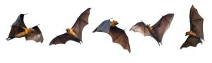 Mysterious World of Bats @ Wadsworth Library | Geneseo | New York | United States