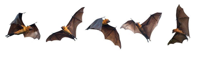 Mysterious World of Bats