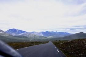 norwegeneins-10