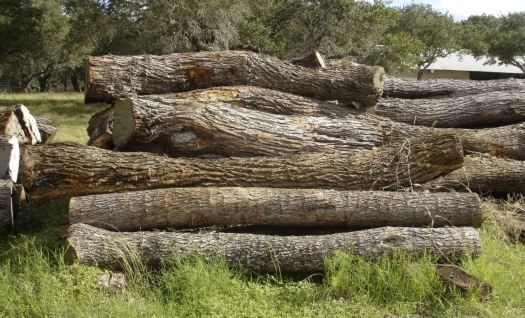Sawmill Logs for processing