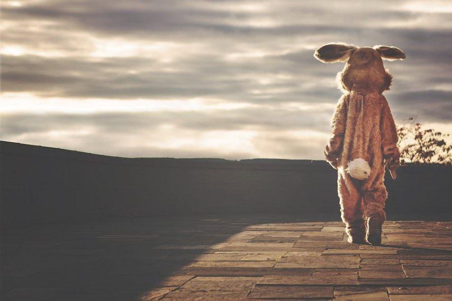 遠くを見つめるウサギ