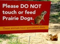 Prairie Dogs, Henry Doorly Zoo, Omaha, NE.