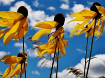 Road-side flowers. Copyright Robert Hartwig.