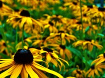 Flowers, Pine Creek Mill, Muscatine, IA. Copyright Robert Hartwig.