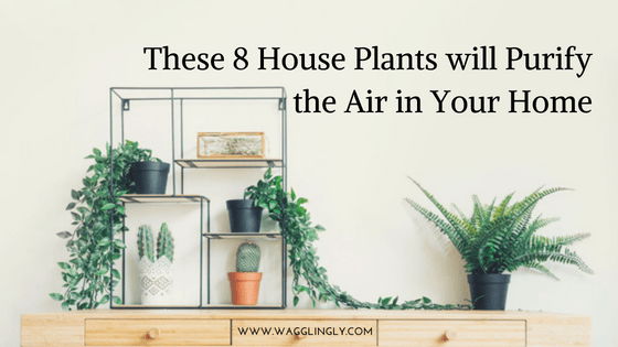 These 8 House Plants will Purify the Air in Your Home