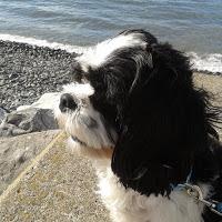 TThe Power of the Dog - Alfie