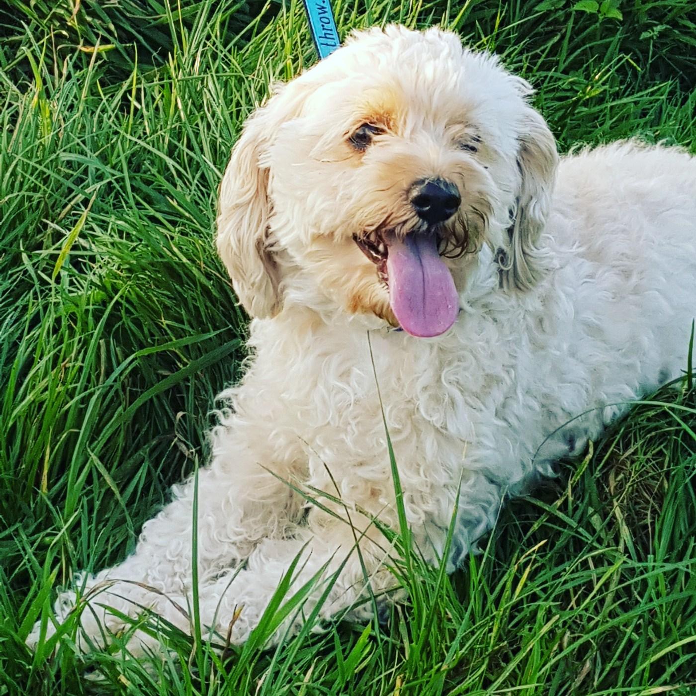 Rosie - Why do dog bury bones?
