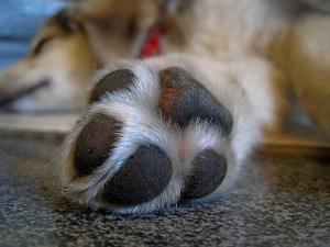 Shoe Paw Puppy Animal Animals Pet Dog