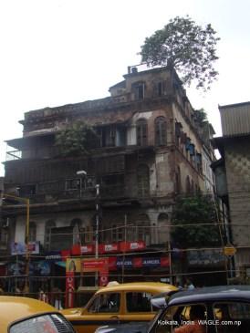 trees in a hosue in Kolkata