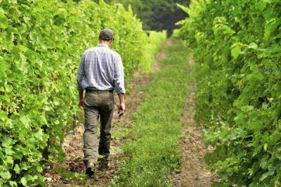 John walking down the vineyard