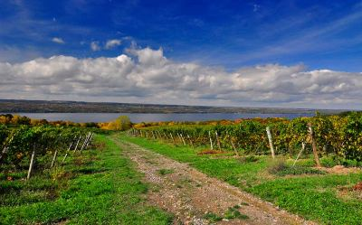 Dirt road through the vineyards