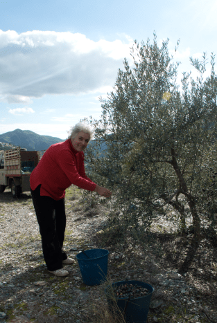 Fajardo Mother picking olives