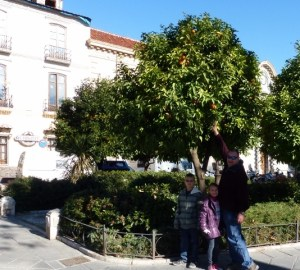 Picking an orange in Granada