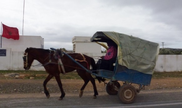 Driving in Morocco Cart