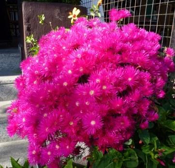 Pops of color - Spring day in Almunecar (3)