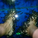 Fish Pedicure Fish Spa Chiang Mai Thailand