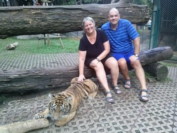 That's a big Medium tiger!
